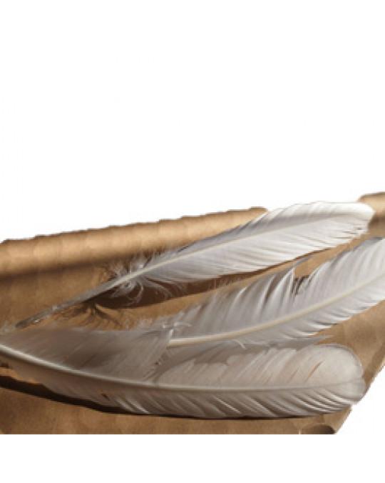 Weisse, langstielige Federn