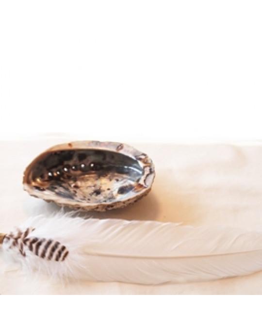 Räucherset mit Seeohr Muschel